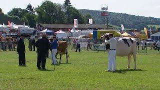 Pencampwriaeth y Gwartheg Holstein | Holstein Dairy Cow Championship