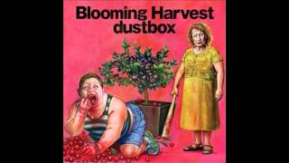 Watch Dustbox Right Now video