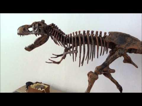 Basics of Phylogenetics - Why Birds Are Dinosaurs