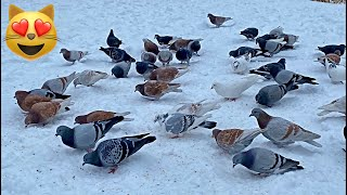 'Birds in Snow' Entertainment for Pets to Watch!