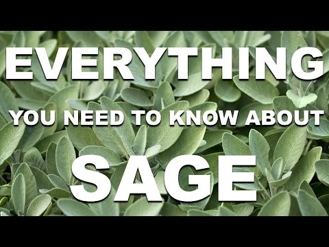 Everything You Need To Know About Sage