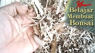 Collecting Bamboo Humus For Bonsai Soil