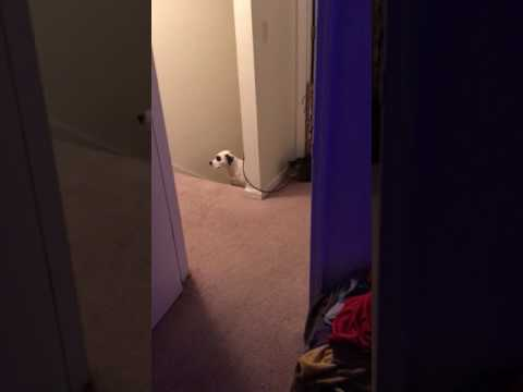 Lex the Rescue Dog - Cat hides, jumps out, scares wrong dog