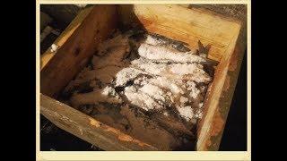 засолка рыбы в колодке северным способом.