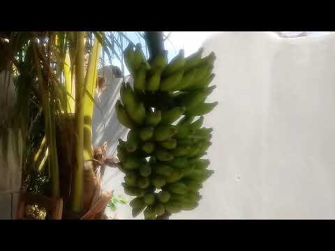 que preparar con palmitos en conserva