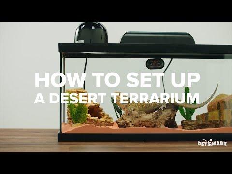 How to Set Up A Desert Terrarium