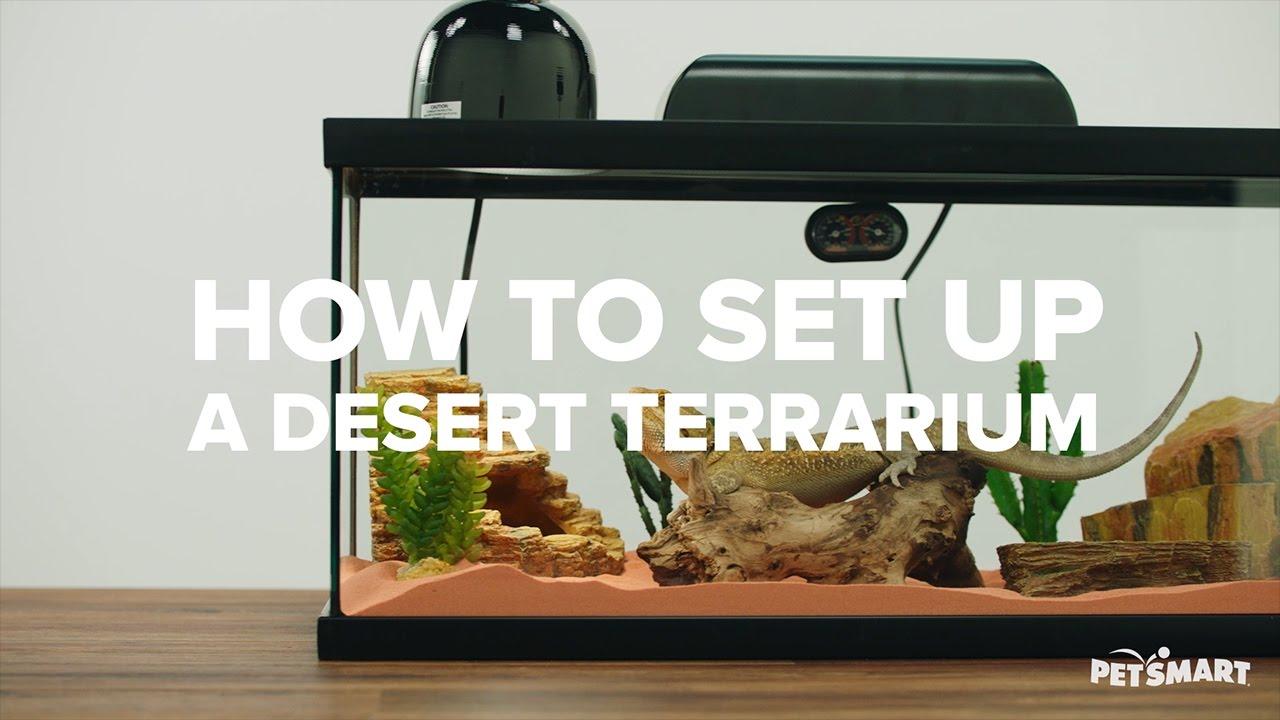 How To Set Up A Desert Terrarium Youtube