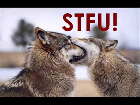 Funny Wolves - YouTube