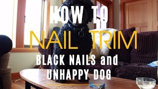 Dog Nail Trim: How To With Black Nails and Unhappy Dog