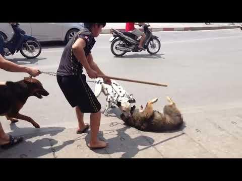 Chó hàng xóm gây sự đánh nhau vỡ mõm