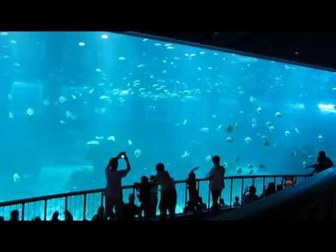 Gigantic SEA Aquarium in Singapore - Marine Life in Resorts World Sentosa RWS | EnterSingapore.info