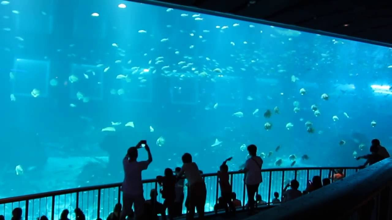 Gigantic Sea Aquarium In Singapore Marine Life Resorts World Sentosa Rws Entersingapore Info