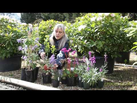 Failsafe Plants For Beginners - Early Spring