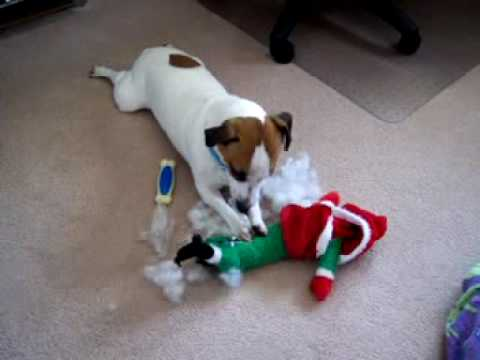 Duke Dog Jack Russell Toy Destroyer & Katie Doxie ...