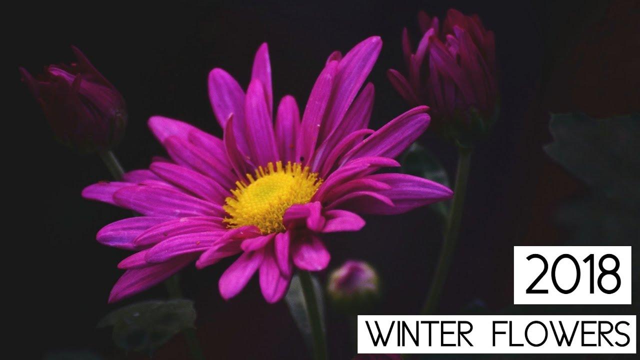 Beautiful winter flowers 2018 house garden youtube beautiful winter flowers 2018 house garden izmirmasajfo
