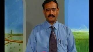 Rosa centifolia get 500 to 700 flowers /plant in Pakistan Dr. Ashraf Sahibzada