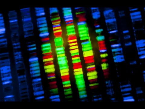 Scientists Build Synthetic Bacteria With Just 473 Genes
