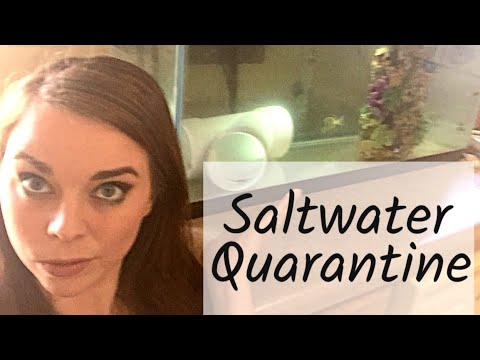 HOW TO QUARANTINE SALTWATER FISH