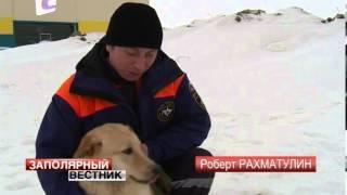 Ненецкие спасатели взяли на обучение четвероногого помощника