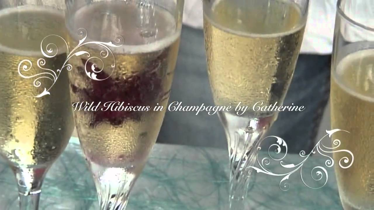 Wild Hibiscus In Champagne By Catherine Youtube