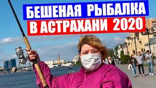 Рыбалка в Астрахани 2020. Астрахань 2020. Бешеный клев рыбы в мае. Ловля селедки. Астрахань вобла.