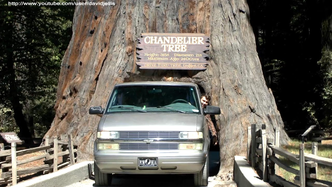 Chandelier Tree - Drive Thru Tree Park, Leggett, California - YouTube