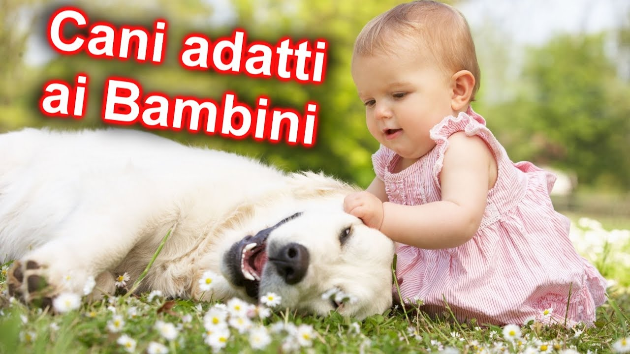 10 razze di cani pi adatte ai bambini youtube for Youtube cani