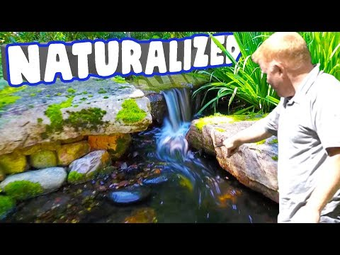 How To Naturalize Ponds And Waterfalls