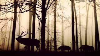 2시간 연속 듣기 | 물영아리 | 제주도 습지의 숲속 소리 | 뉴에이지 연주곡