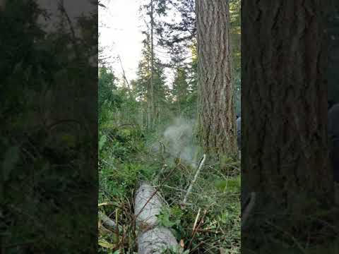 More firs falling over
