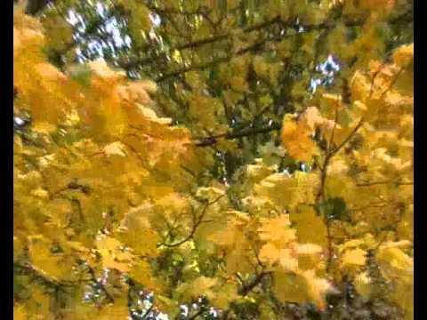 фото на заставку осень