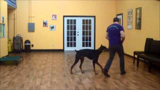 San Antonio Dog Training Co Cerberus