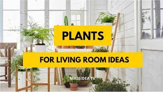 50+ Amazing Indoor Plants for Living Room Ideas