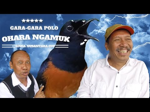 Gara-Gara Pelawak POLO Murai Batu OHARA Ngamuk Di Singa Nusantara Cup