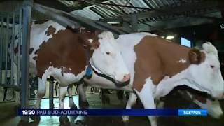 Situation éleveurs laitiers dans les Pyrénées Atlantiques