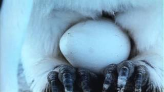 南極の厳しい自然の中で暮らす皇帝ペンギンたち。その求愛から子育てま...