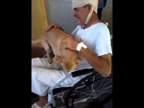 The Amazing Loyalty a Dog Has Demonstrated for His Owner Proves That Dogs Truly Are 'Man's Best Friend'