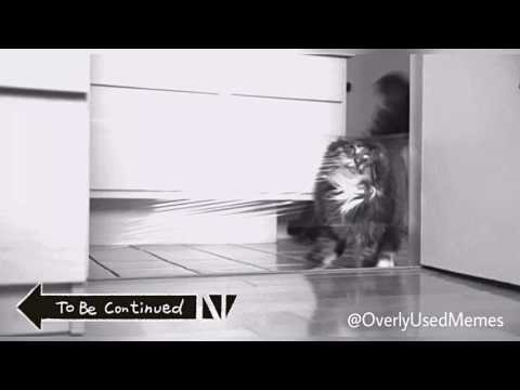 To Be Continued (Cat Edition)