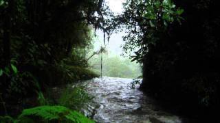 RELAX OR STUDY WITH NATURE SOUNDS: Rain in the Forest without Music / 5 hours