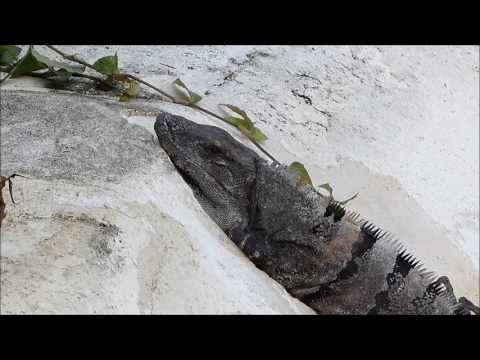 Occidental Grand Cozumel resort walkaround