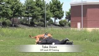 Giving A Demo At Hartwood Animal Hospital In Fredericksburg Virginia