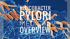 Helicobacter pylori (Medical Overview)