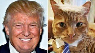 Pet HATES Donald Trump || Funny cat compilation || Donald trumps funny 2016