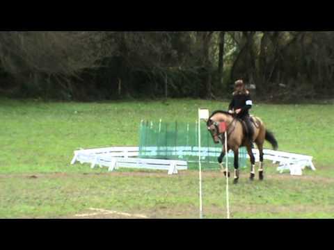 Feira Internacional do Cavalo - Golegã 2010, Equit...