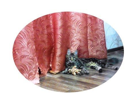 Новогодний костюм кошки для девочки своими руками мастер класс