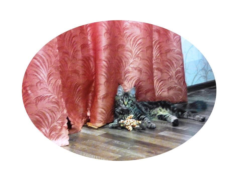 Как сделать костюм кошки для девочки фото 793