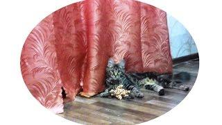 Как сделать костюм кошки?(Из видео-урока вы узнаете о том, как быстро сделать костюм кошки для девочки на новогодний утренник или..., 2015-12-12T19:56:06.000Z)