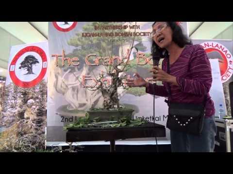 A Day in the Life of Bonsai Iligan: Demo at the Cagayan de Oro Bonsai Show August 2015