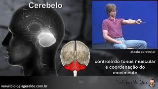 Sistema Nervoso 2 - O Encéfalo