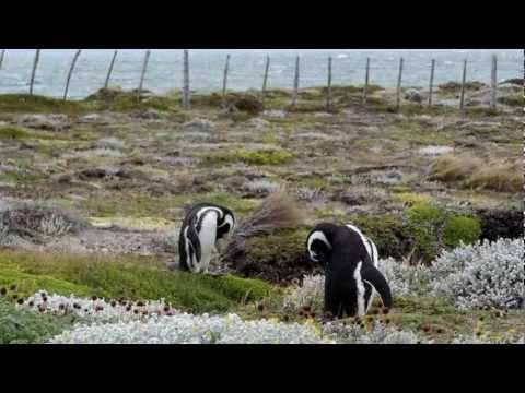 Antarctica Veendam 2012